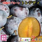 冷凍 シャーベット 生 プルーン トレジディ 減農薬 長野県産 2キロ