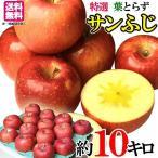 特選 贈答用  りんご サンふじ 減農薬 長野県産 10キロ レビューを書いたら200円クーポン