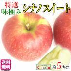特選 葉とらず 味極み りんご シナノスイート 減農薬 長野県産 5キロ
