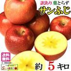 訳あり 葉とらず 味極み りんご シナノスイート 減農薬 長野県産 5キロ
