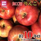 8月中旬発送 ジャム 加工用 品種おまかせ りんご 減農薬 長野県産 約10キロ