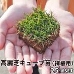 芝 芝生 高麗芝 ポット苗 25苗 補植用 キューブ苗 高麗芝 切芝 切り芝 補修 傷んだ芝生 芝生 修復
