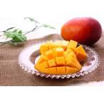 マンゴー 宮崎県産 完熟アップルマンゴー  2玉(700g〜1kg)入り 化粧箱入り ギフト 送料無料