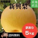 【ご自宅向け】 新興(しんこう)梨5キロ詰め 数量限定 超お買い得 鳥取県産