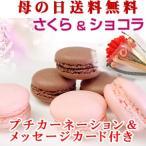 訳ありケーキ スイーツ 桜スイーツ さくら ショコラ マカロン ギフト 母の日 お菓子 ケーキ 送料無料 春限定 Z