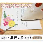 押し花 はがき 年賀状 手作り ポストカード アイロン 簡単 日本製  はがき用押し花キット