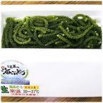 球美の海ぶどう400g 代引不可 送料無料 久米島産  海ブドウ