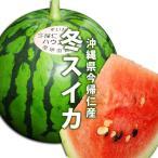 沖縄県今帰仁産スイカ 1個入り 1個2,5kg〜3,5kg 12月中旬発送 送料無料