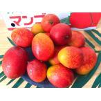 沖縄県産ミニマンゴー1kg 8〜26個入 送料無料 ご家庭用 ギフト対応不可