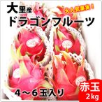 送料無料 大里産ドラゴンフルーツ 赤玉2kg4玉〜6玉