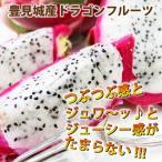 送料無料 豊見城産ドラゴンフルーツ白玉1kg 2〜3玉