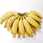 送料無料 南城市産国産バナナ2kg 熱田果樹園