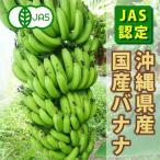 送料無料 JAS認定 国産バナナ10kg 呉屋ファーム