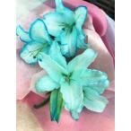 母の日 父の日 御祝 生花 カサブランカ 青の花 ブルー 水色 花束(M) 誕生日 祝 開店