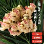 【冷蔵便】高知県産 黄金新生姜1kg 7月中旬より発送 季節限定の