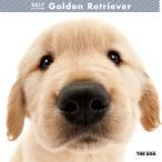 THE DOG 2017年カレンダー ゴールデンレトリーバー(カレンダー アーリスト THE DOG 壁掛け ゴールデンレトリバー)