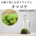 小さな苔の森 タマゴケ micro pot  ◆人気No. 1【苔テラリウム】