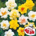 八重咲水仙お楽しみ福袋(品種見計らい・名称付) 40球