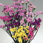 種 花たね スターチス混合 1袋(100mg)/タネ たね
