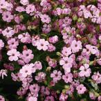 種 花たね サポナリア 桃花 1袋(500mg)/タネ たね