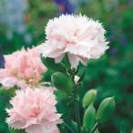 種 花たね カーネーション ラフランス 1袋(200mg)