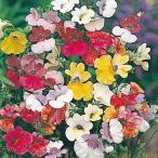 花たね ネメシアバイカラー混合 1袋(50mg)