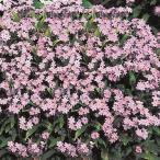 花たね わすれな草 ローズ 1袋(200mg)