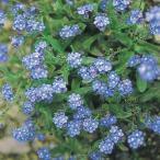 種 花たね わすれな草 ブルー 1袋(100mg)