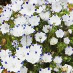 種 花たね ネモフィラ マクラータ 1袋(500mg) / 花種 花の種 はなたね 鉢植え向き 鉢向き 花壇向き プランター向き 鉢・花壇向き