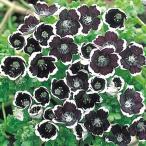 花たね ネモフィラ ペニーブラック 1袋(200mg)