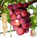 果樹苗 ブドウ クイーンニーナPウイルスフリー苗 1株