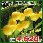 果樹苗 サクランボ 月山錦R 1株