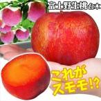 果樹苗 スモモ 貴陽富士野生桃R 1株