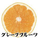 果樹苗 カンキツ グレープフルーツ特等苗 1株 / 果物 フルーツ苗