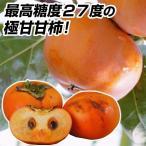 果樹苗 甘柿 恋姫 1株