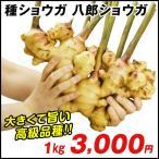 種ショウガ 八郎ショウガ 1kg / 生姜 しょうが たね芋