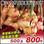 種ショウガ 土佐産大ショウガ 500g