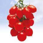野菜たね トマト イタリアミニトマト 1袋(1ml) / 種 タネ
