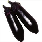 野菜たね ナス F1中長茄子 1袋(1ml) / タネ 種