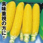 野菜たね トウモロコシ F1グットイエロー  1袋(30ml) / 種 タネ
