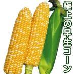 野菜たね トウモロコシ F1早生フレッシュコーン  1袋(30ml) / タネ 種