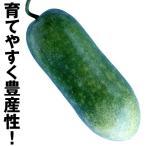 野菜たね ウリ 早生長冬瓜 1袋(3ml) / 種 タネ