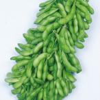 野菜たね 枝豆 ほうらく 1袋(20ml) / 種 タネ
