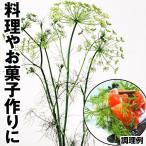 野菜たね ハーブ ディル 1袋(3ml)
