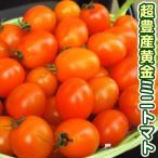 野菜たね トマト F1ゴールデンハニー 1袋(12粒)
