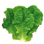 野菜たね 菜類 青チマサンチュ 1袋(5ml)