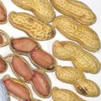 種 野菜たね 落花生 タチマサリ 1袋(30ml) / 野菜のタネ 野菜 種子 国華園