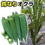 野菜たね オクラ F1鈴なりオクラ 1袋(10ml) / 種 タネ
