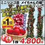 果樹苗 リンゴ メイちゃんの瞳(メイ17P) 1株