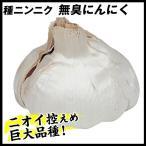 ニンニク 種球 無臭ニンニク 1kg / 種にんにく ニンニクの種 国華園